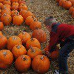 Fall Faves: a Top Ten List