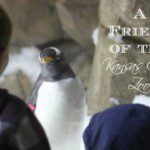 A Friend of the Kansas City Zoo