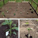 Garden Mama: Garden Prep and Planting