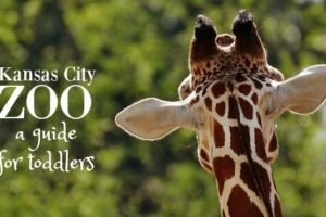 The Kansas City Zoo: a Guide for Toddlers