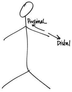 proximal-distal