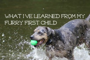 What I've Learned From My Furry First Child