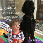 5 Tips for Raising a Puppy and Toddler