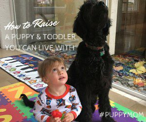 puppy and toddler