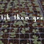 Watch Them Grow; Empowering our Unique Little Learners