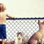 When Babies and Pets Don't Mix