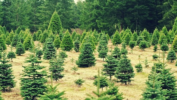 - 2017 Guide To Christmas Tree Farms In Kansas City