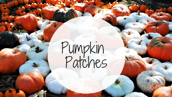 Pumpkin Patches In Kansas City