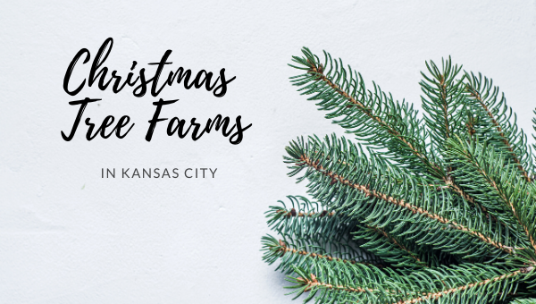 Christmas Tree Farms in Kansas City