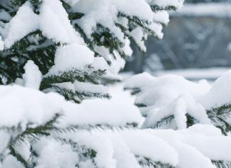 tree with snow