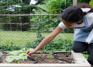 9 yr old Labeling garden vegetables.