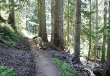 pic of hiking trail