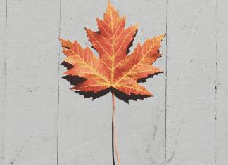 pic of orange maple leaf