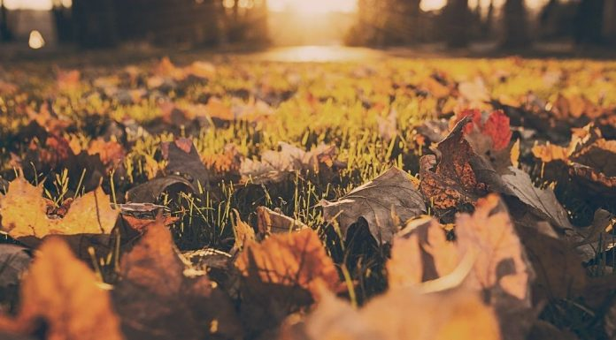 leaves on a grassy field at sunset