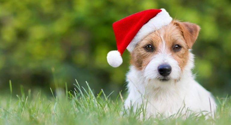 Have a Paws-itively Merry Christmas with Your Pets