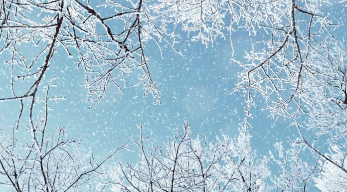 pic of snowy trees