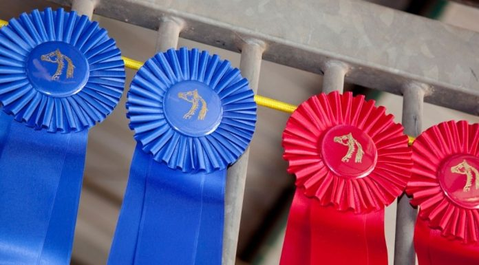 first and second place ribbons from a horse show