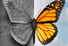 butterfly from black and white to colored